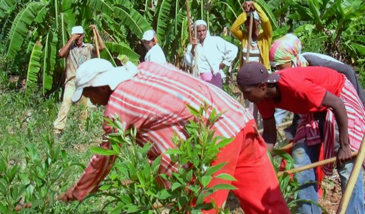 Centro de Agricultura Alternativa Vicente Nica – CAV (Vicente Nica Center for Alternative Agriculture – CAV)