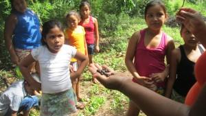 """A semente chamada de """"saboneteira"""" era usada pelos índios para lavar roupa e confeccionar colares e brincos"""