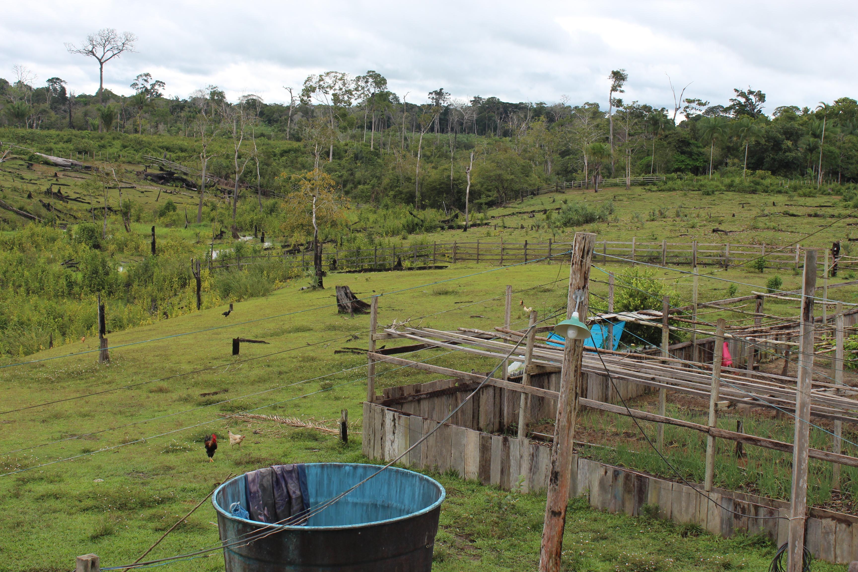 BrazilFoundation » Na Amazônia, aliar inovação à valorização dos ...