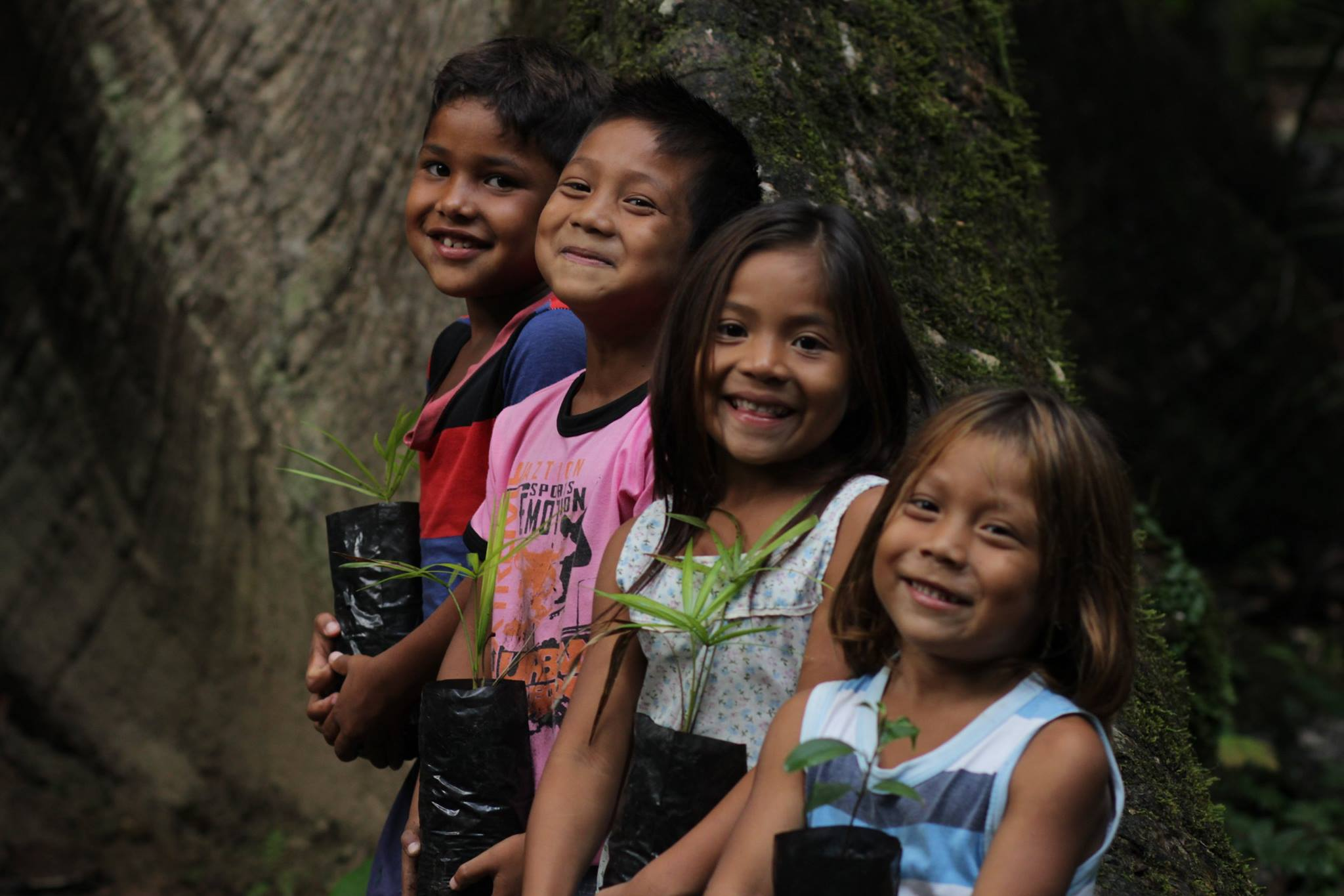 sos Amazônia BrazilFoundation sustentabilidade Amazonas educação ambiental
